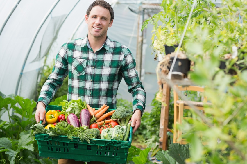 Агроволокно, используемое для теплиц, позволяет увеличить урожайность